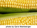 cornonthecob21.jpg